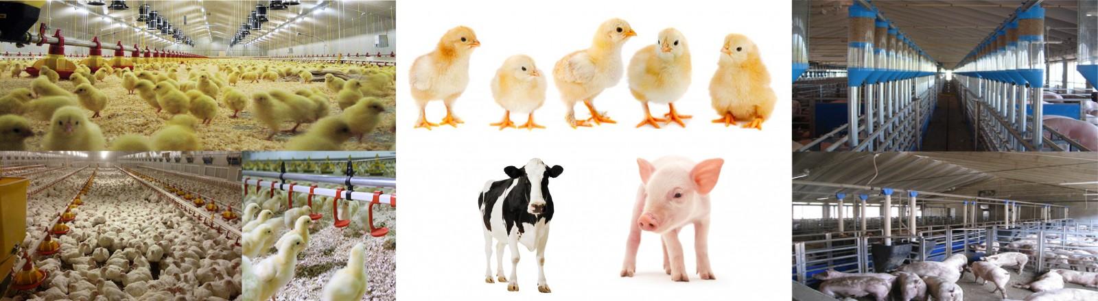 Συστήματα Διανομής Τροφής Νερού Κτηνοτροφικών θαλάμων